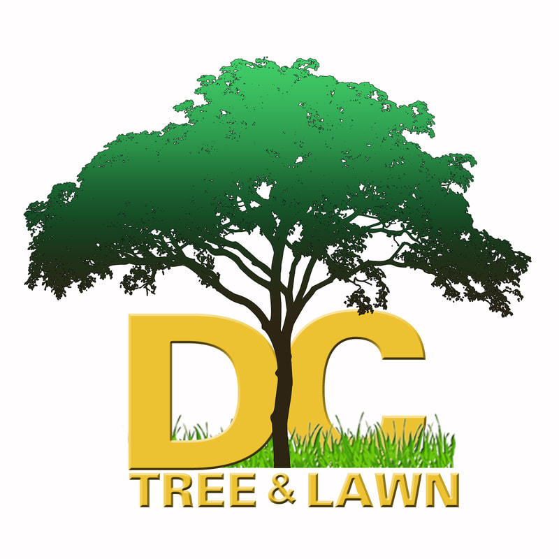 Davids Complete Tree Lawn David S Complete Tree And Lawn Services Anderson Sc